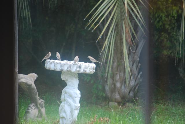 Katrina,cats and birds 7-31-2013 016